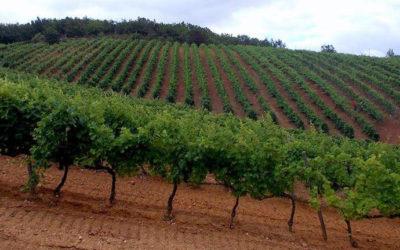 Remote tradizioni, antichi vitigni, moderni piaceri