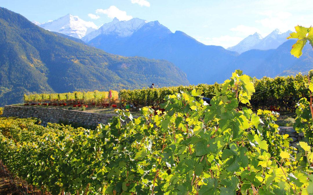 Vini d'Oro. Valle d'Aosta – Vallée d'Aoste