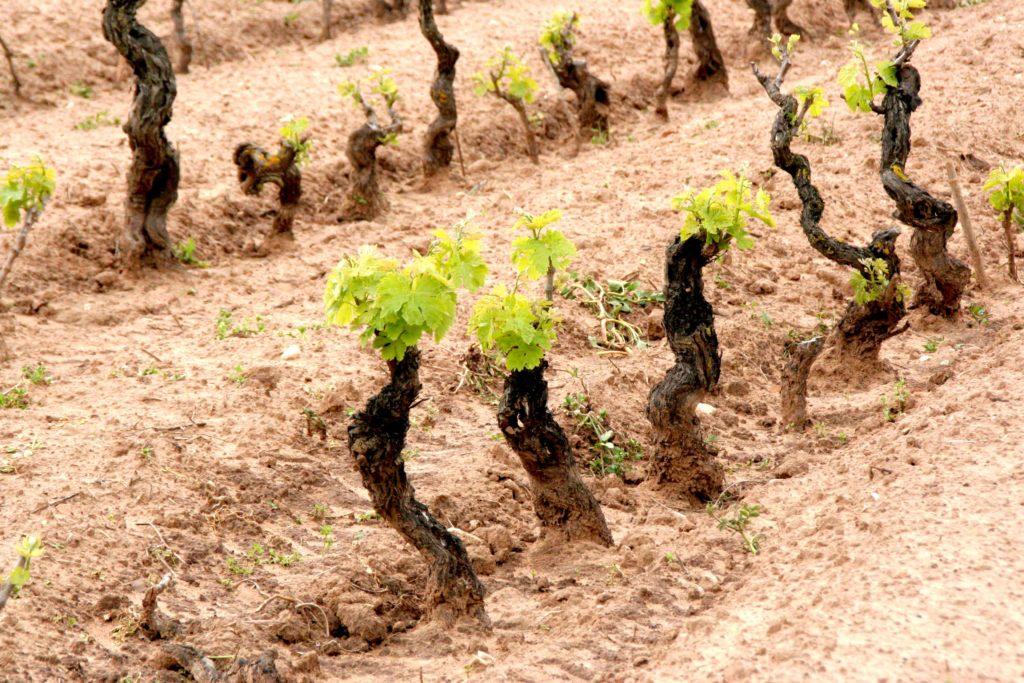 Sardegna Vino