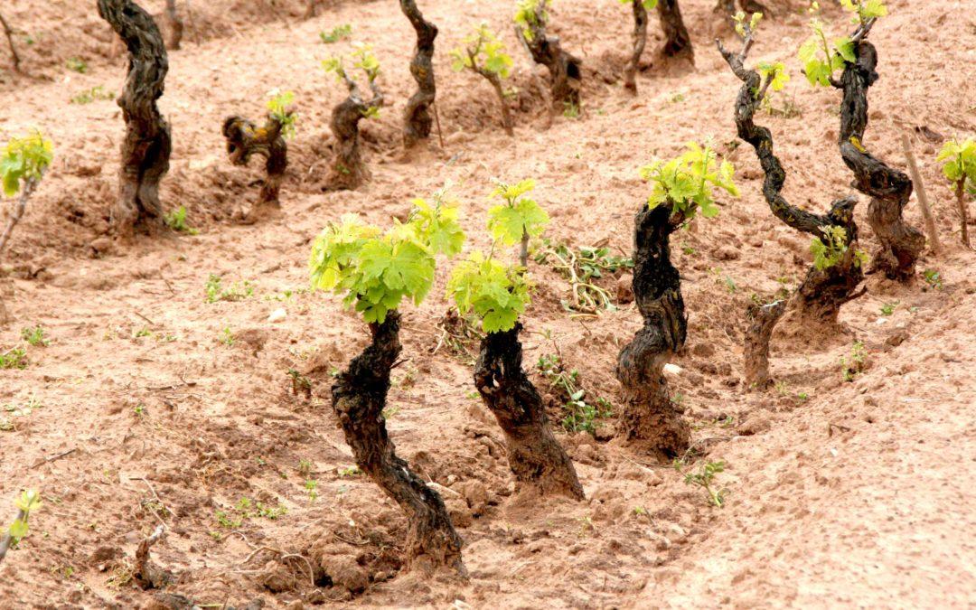 Vini d'Oro. Sardegna