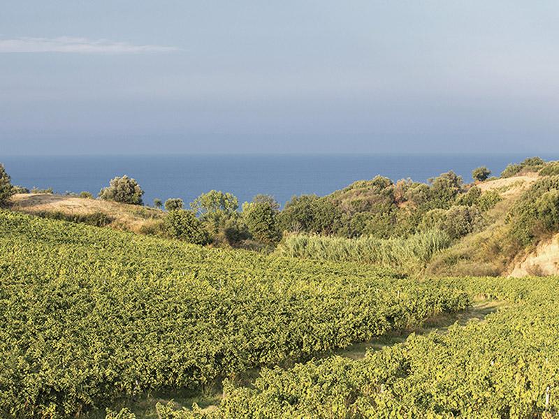 Vini d'Oro. Calabria