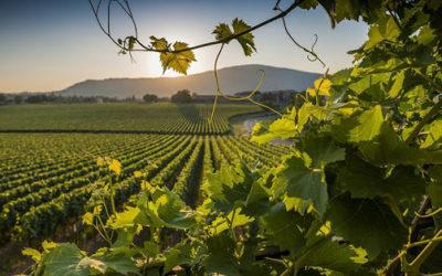 Vini d'Oro. Lombardia