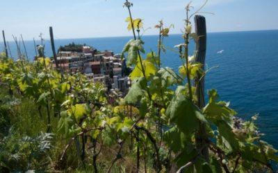 Vini d'Oro. Liguria