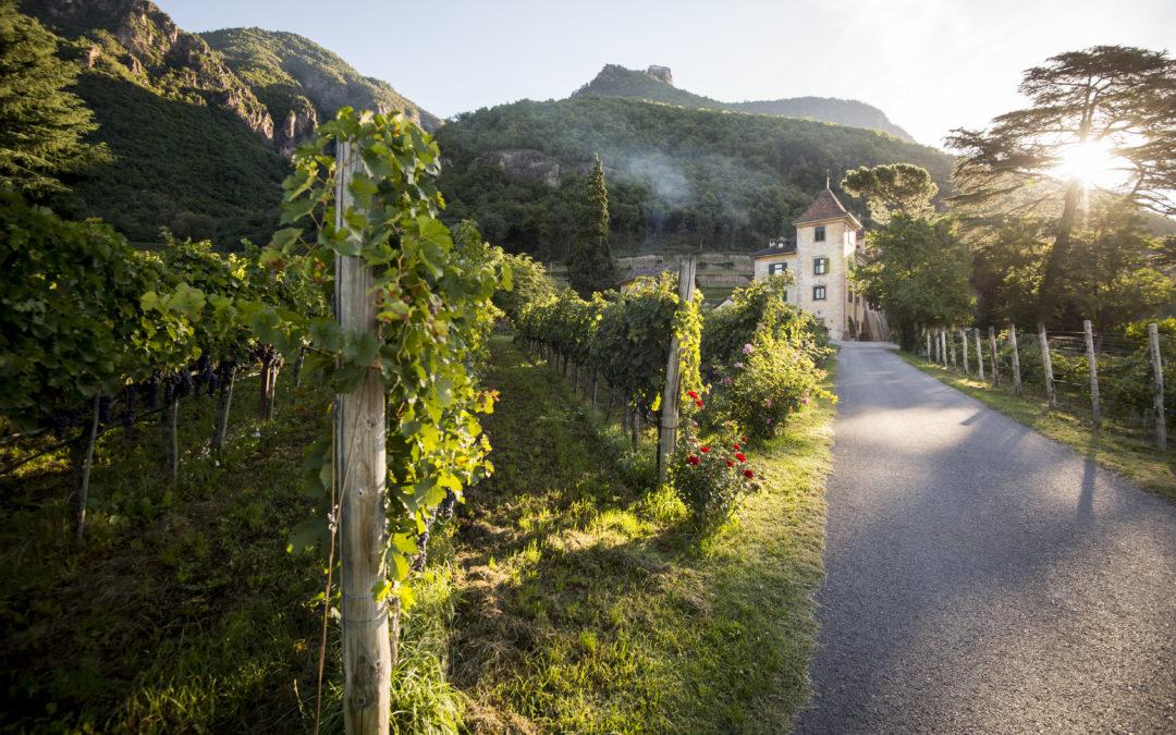 Vini d'Oro. Alto Adige – Südtirol