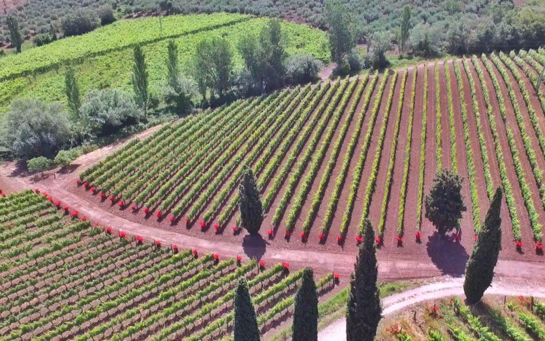 Vini d'Oro. Campania