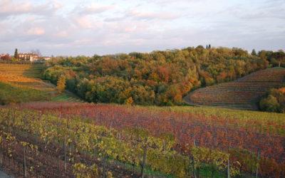 Vini d'Oro. Friuli Venezia Giulia