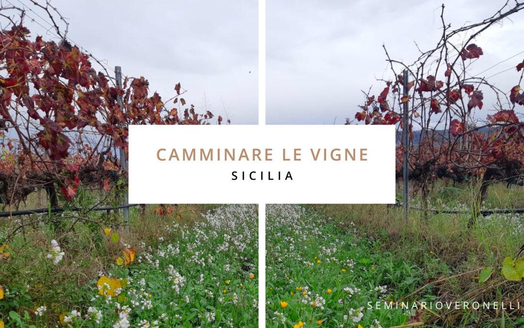 SICILIA. Camminare le vigne