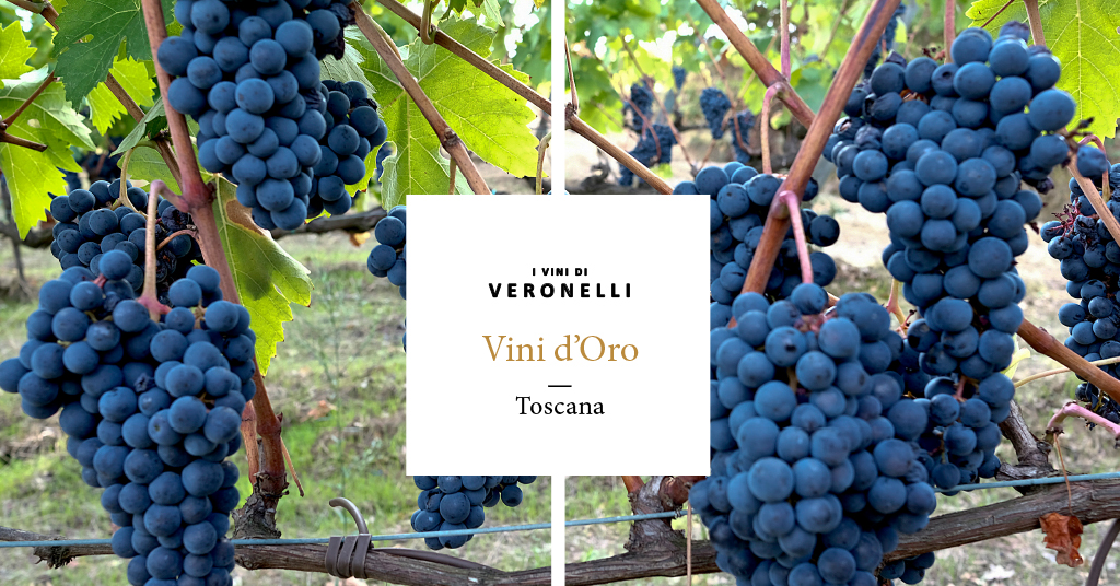 Ixe Tempranillo Toscana 2018 Pietro Beconcini